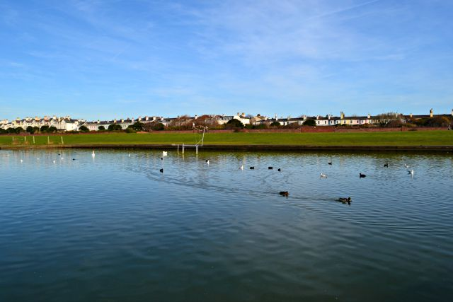 Crosby Marina Duck Pond