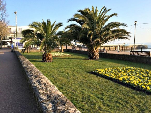 Palm Trees in Torquay