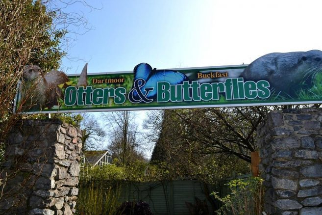 Otters and Butterflies