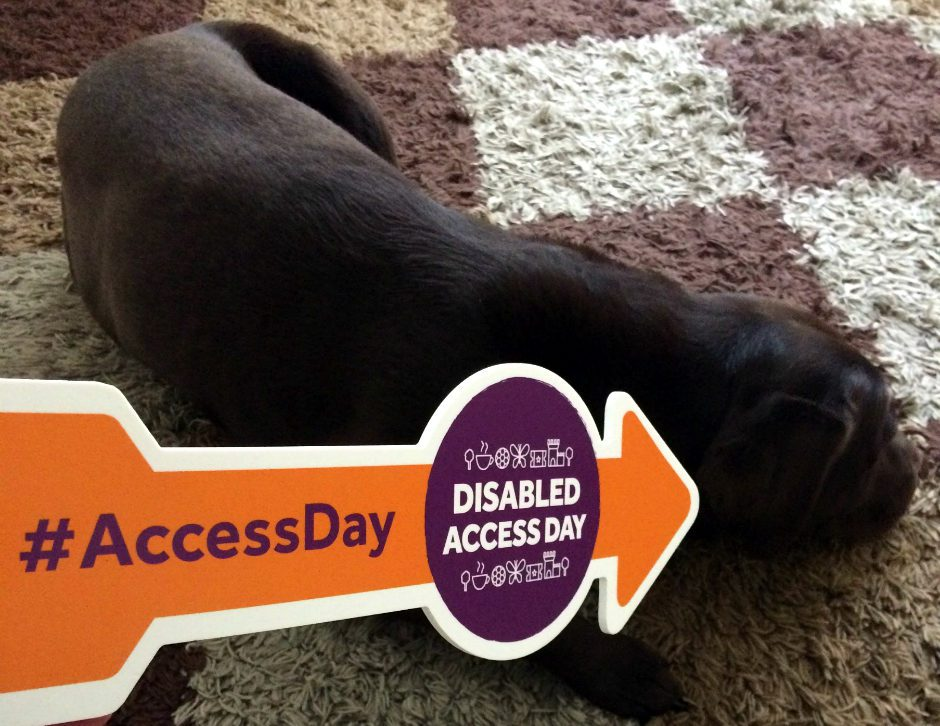Disabled Access Day Dogs