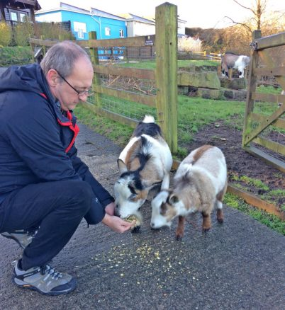 Feeding the Goats at Gwel an Mor