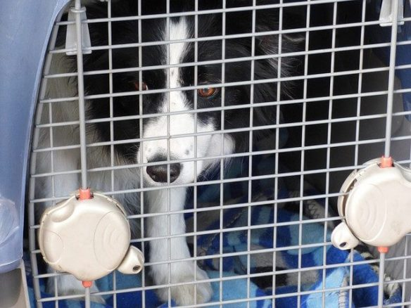 A Dog in a Car Crate for Safety When Travelling